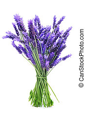 a bunch of lavender on a white background