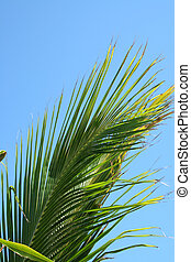 A Palm Frond against a blue sky