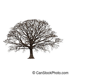 Abstract Winter Oak