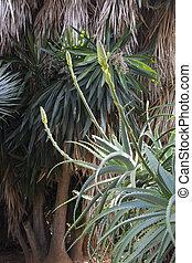 Aloe Vera natural environment