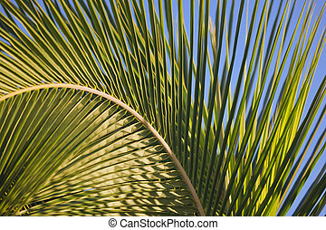 Large palm frond bending in the wind makes abstract design