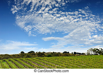 Australian Vineyard Landscape