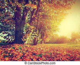 Autumn, fall landscape in park