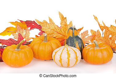 Arrangement of gourds with autumn leaves on a white background