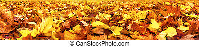 Autumn leaves lying on the ground, super wide banner format, vibrant colors