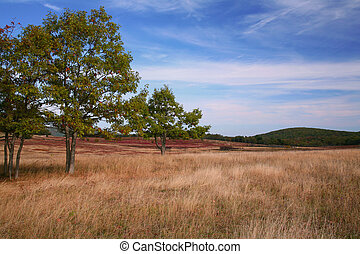 Autumn Pasture Scene with Trees and Grass