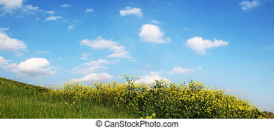 Sky And Grass - wide