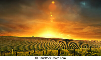Barossa Sunset