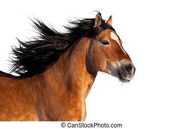 Bay active horse head isolated
