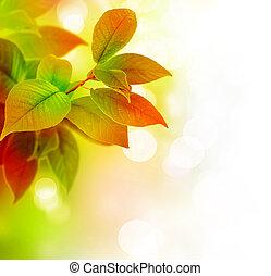 Beautiful Leaves