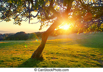 Beautiful mountain nature landscape. Alpine meadow with a tree over sunset