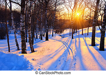 sunset in a winter park