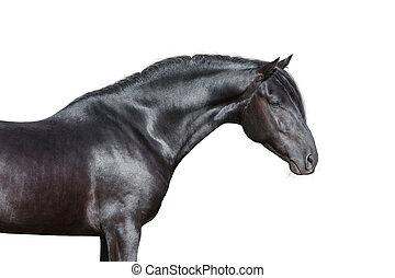 Black horse head on white