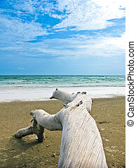 Blue sea and sky with log on beach