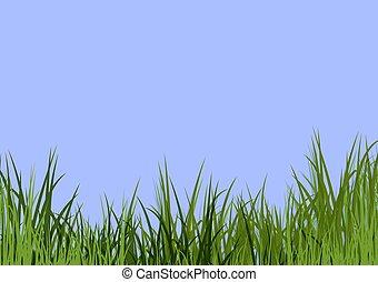 blue sky & grass