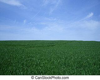 Blue Sky, Green Grass Background
