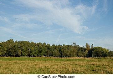 blue sky, green grass