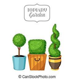 Boxwood topiary garden plants. Decorative trees in flowerpots