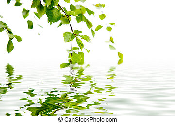 Branch of a birch and reflexion in water