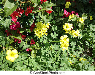 Bright yellow red Wildflowers in meadow with green plants