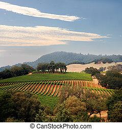 View at at California hills with rows of grapes