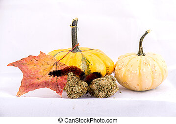 Caterpillar sitting on cannabis nugs & gourds isolated over white