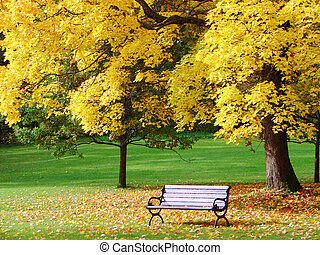 Bench and maple in city park in the autumn