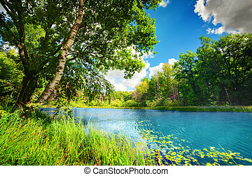 Clean lake in green spring summer forest