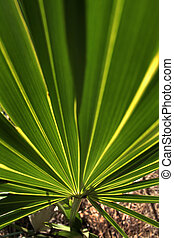 close-up of bright green palm frond