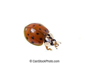 Close up of lady bug