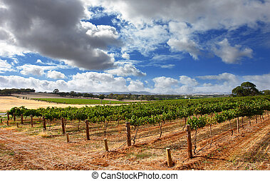 Cloudy Vineyard