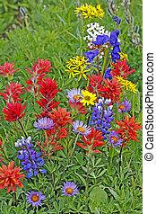 Cluster of Wildflowers in meadow