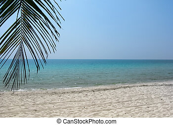 Coconut leaf on white sand beach and aqua sea