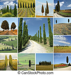 collage with cypresses in Tuscany