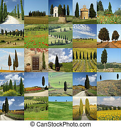 collage with landscape with cypress