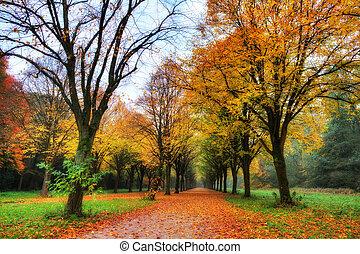 Colored autumn lane