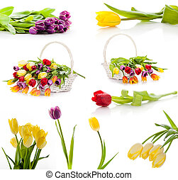 Colorful fresh spring tulips flowers. set of tulips isolated on white background