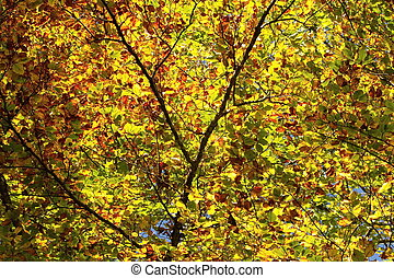 Colorful tree leaves in autumn