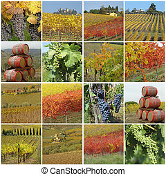 colorful vineyards collage