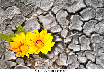 Concept of persistence. Flowers blooming in dry land