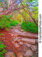 Craggy Garden Trail