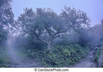 Craggy Gardens North Carolina Blue Ridge Parkway Autumn NC sceni