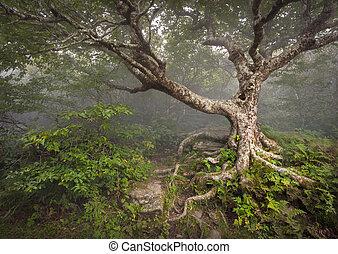 Creepy Fairytale Tree Spooky Forest Fog Appalachian NC Fantasy Landscape at Craggy Gardens in the Blue Ridge Mountains near Asheville North Carolina