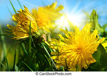 Dandelions in the grass against a blue sky