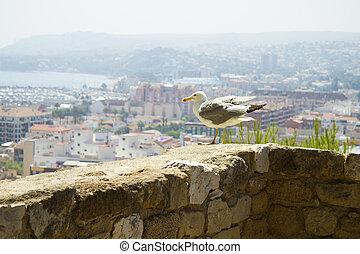 Denia alicante view from castle