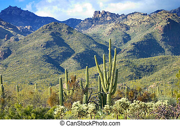 View of Catalina Mountains in Tucson