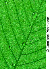 Water droplets dew on green leaf surface