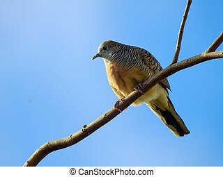 Dove Bird Island on branch and blue sky background.