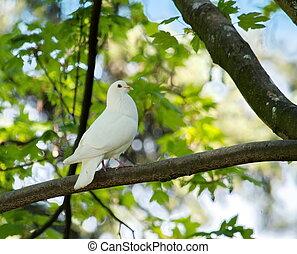Dove in the tree