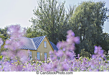 Drowning in flowers summer residence house countryside and blooming purple wildflowers in meadow